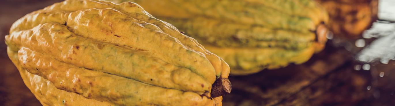 Cabosse-cacao-nacional-origine-équateur